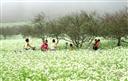 Hấp dẫn du lịch Mộc Châu theo mùa, tháng trong năm