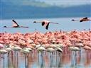 Du Lịch Tràm Chim- Điểm đến hấp dẫn du khách mùa nước nổi Miền Tây.