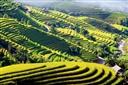 Hoàng Su Phi cung đường lúa tháng 10